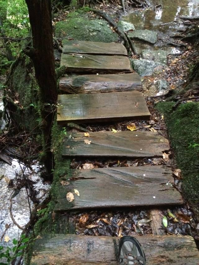 japan16-yakusugiland-cedar-steps6