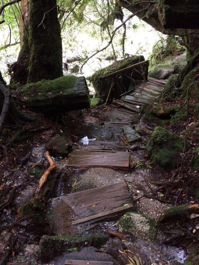 japan16-yakusugiland-cedar-steps9