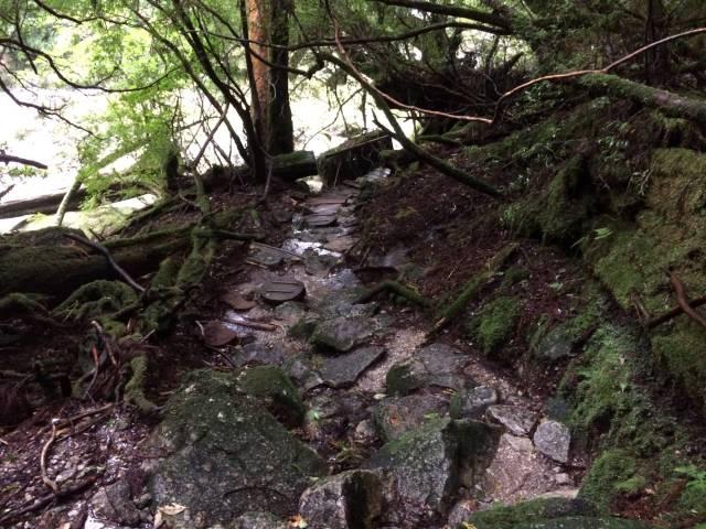 japan16-yakusugiland-steps39