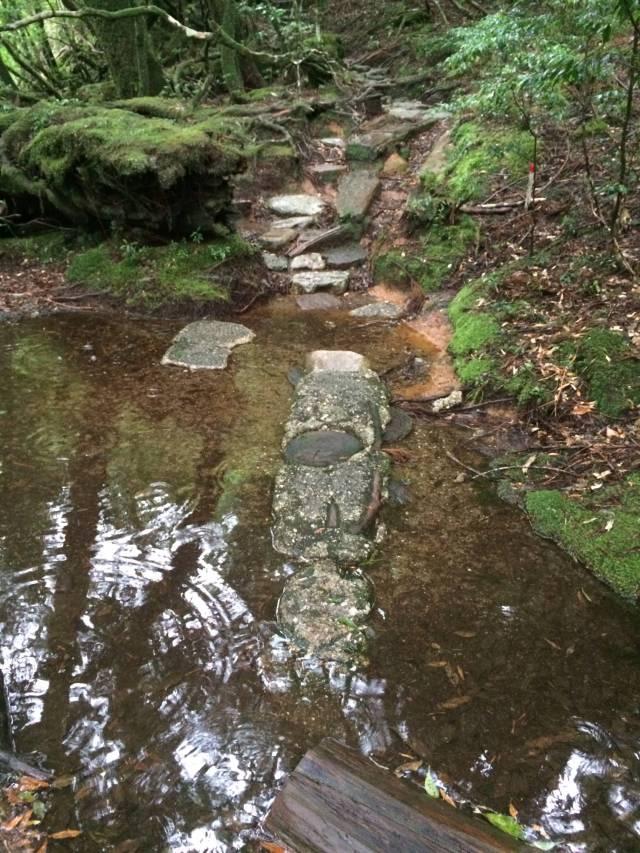 japan16-yakusugiland-steps43
