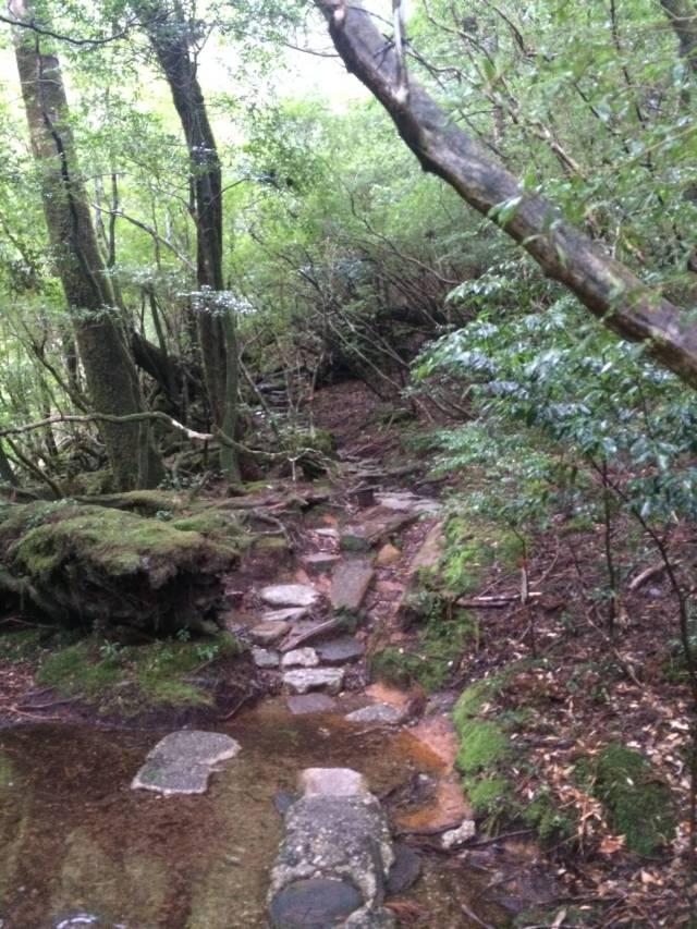 japan16-yakusugiland-steps44