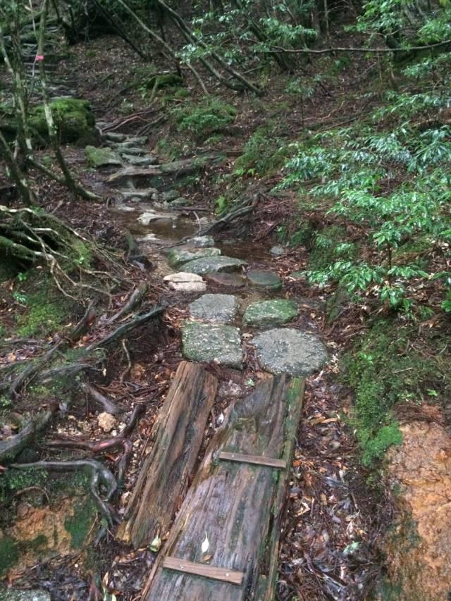 japan16-yakusugiland-steps45
