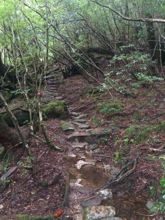 japan16-yakusugiland-steps46
