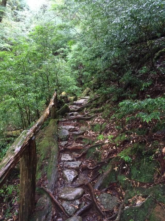 japan16-yakusugiland-steps47