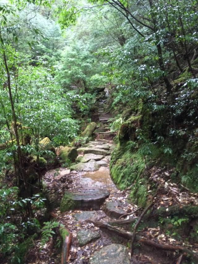 japan16-yakusugiland-steps48