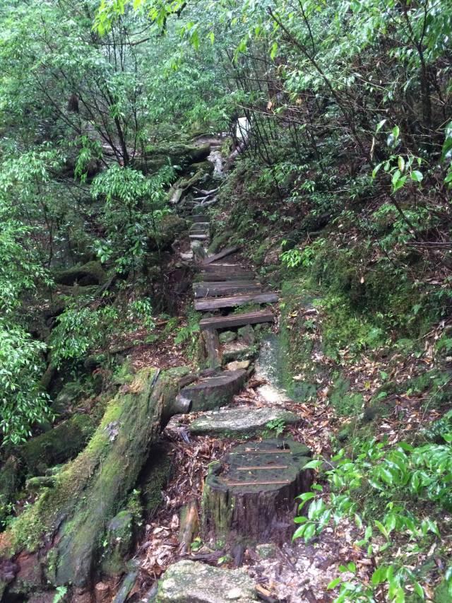 japan16-yakusugiland-steps49
