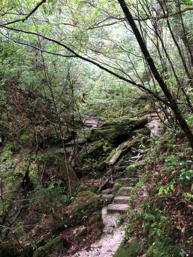 japan16-yakusugiland-steps50