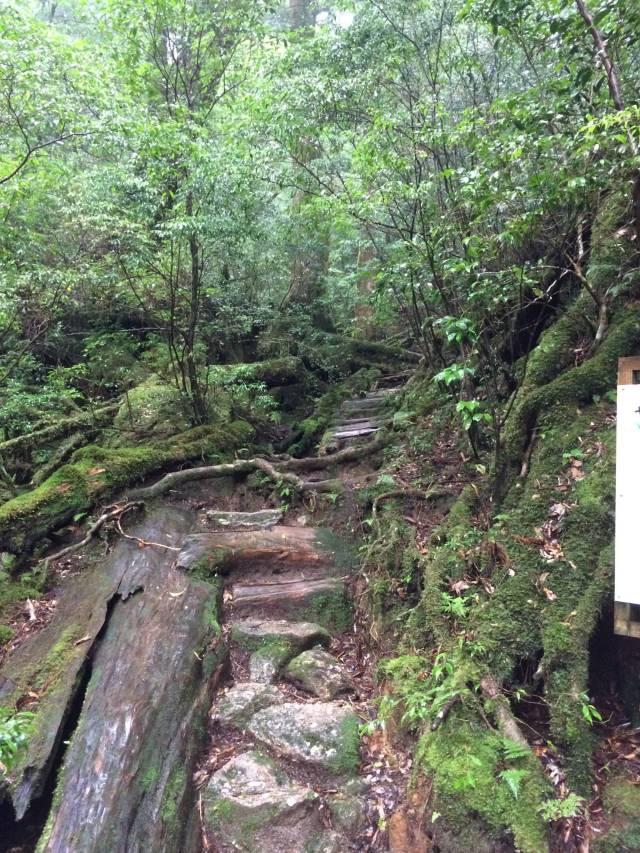 japan16-yakusugiland-steps51