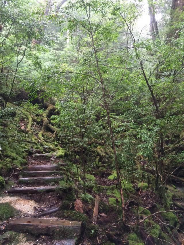 japan16-yakusugiland-steps52