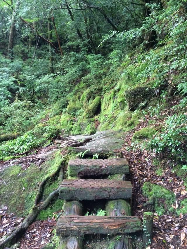 japan16-yakusugiland-steps57