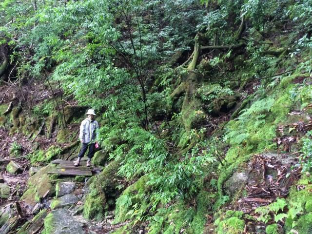 japan16-yakusugiland-steps59