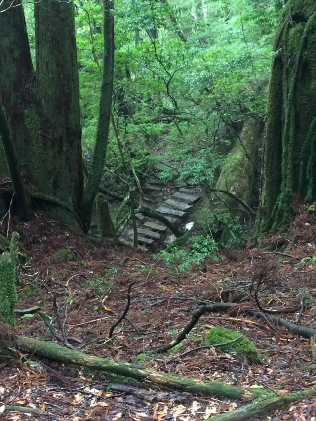 japan16-yakusugiland-steps60