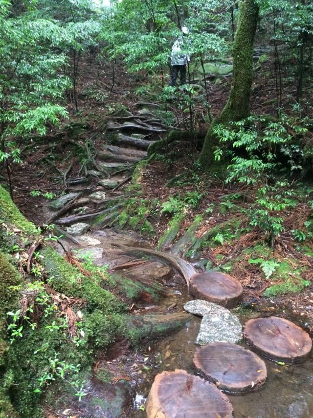 japan16-yakusugiland-steps61