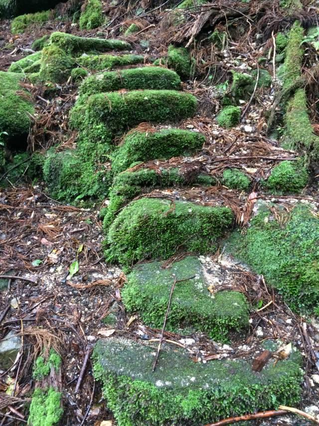 japan16-yakusugiland-steps62